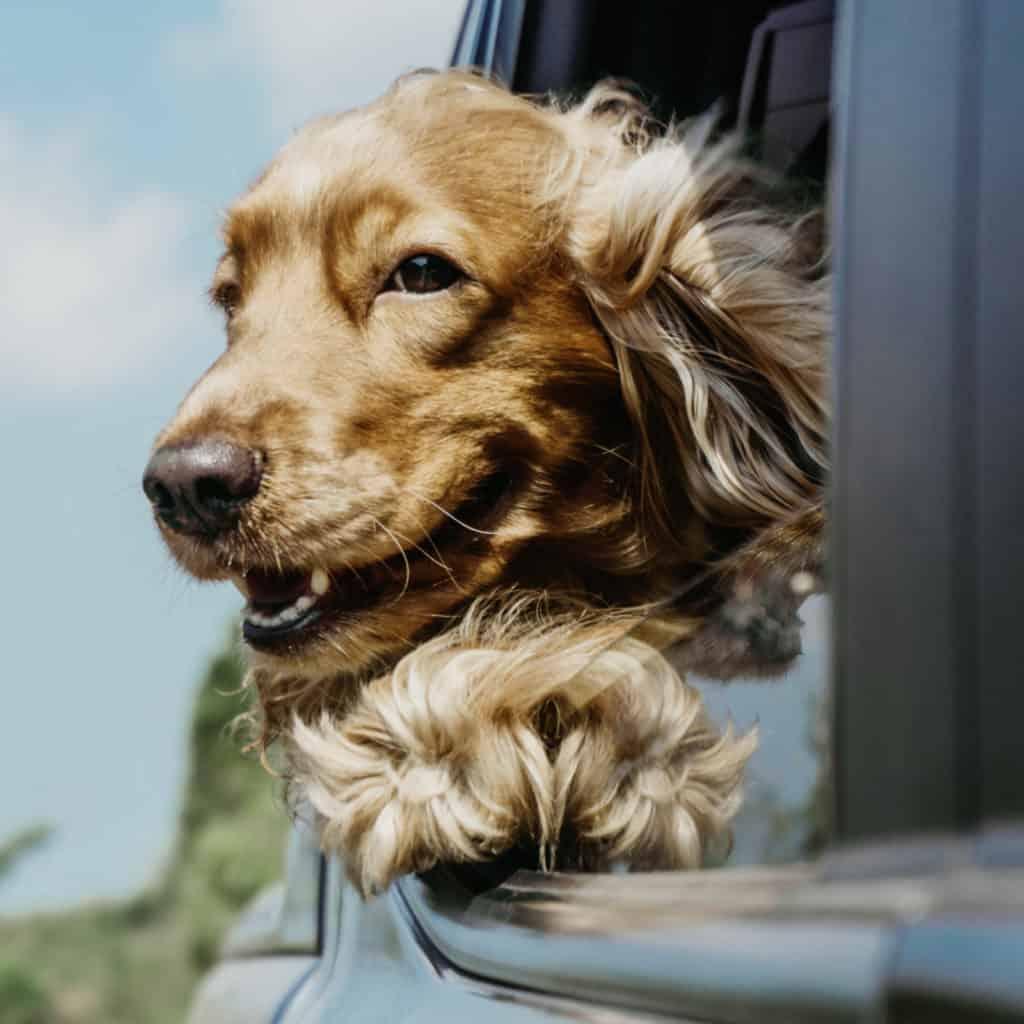 Mit dem Hund ans Meer in den Urlaub